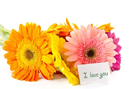 bunch of different colored gerbera on a white background photo