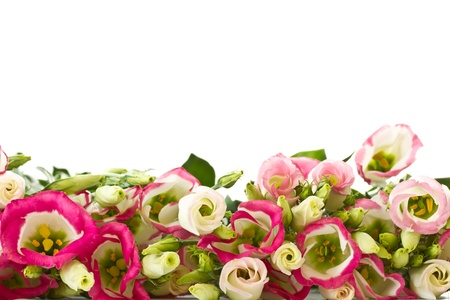 bouquet of pink lisianthus flowers on a white background photo