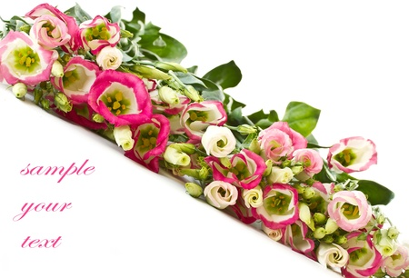 bouquet of pink lisianthus flowers on a white background Stock Photo - 13075061