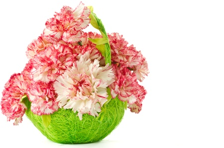 Beautiful blooming pink carnations on a white background photo