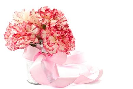 Mooie bloeiende roze anjers op een witte achtergrond