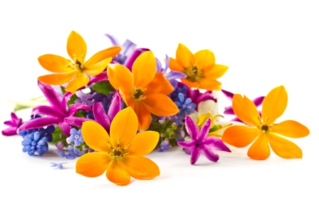 beautiful bouquet of spring flowers on a white background Stock Photo