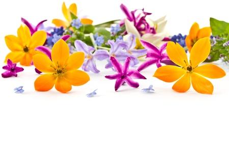 petites fleurs: beau bouquet de fleurs printani�res sur fond blanc