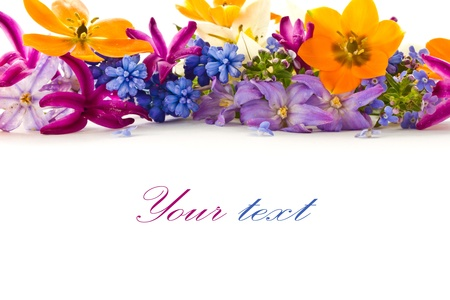 congratulation: beautiful bouquet of spring flowers on a white background Stock Photo