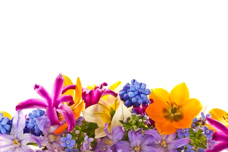 violet flower: beautiful bouquet of spring flowers on a white background Stock Photo