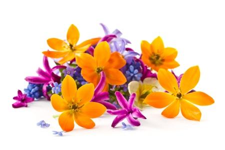 白い背景の春の花の美しい花束 写真素材