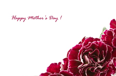 red carnation: beautiful bouquet of red carnations on a white background