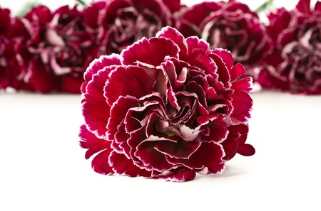 beautiful bouquet of red carnations on a white background photo