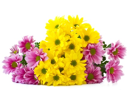 beautiful bright flowers Chrysanthemum on a white background photo