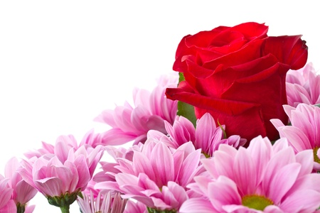 beautiful red rose and chrysanthemum on a white background photo
