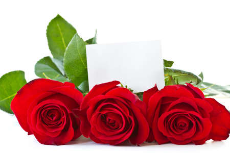 beautiful blooming red roses on a white background photo