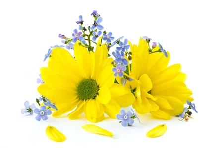 bellissimi fiori di crisantemo luminoso su uno sfondo bianco Archivio Fotografico