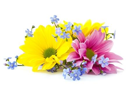 mooie heldere bloemen chrysant op een witte achtergrond Stockfoto