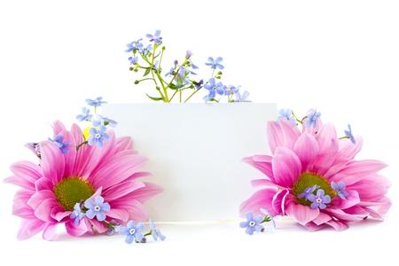 Schöne bunte Blumen Chrysantheme auf weißem Hintergrund Standard-Bild - 13401081