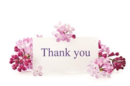 Schöne Blumen blühen Flieder auf einem weißen Hintergrund Standard-Bild - 13488836