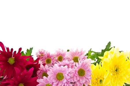 Chrysant bloemen zijn mooi op een witte achtergrond Stockfoto - 13751306