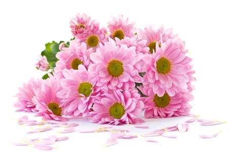 Chrysant bloemen zijn mooi op een witte achtergrond Stockfoto - 13751320