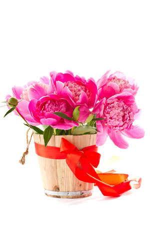 Bright pink flower blooming peony on white background photo