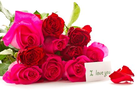 bright beautiful pink roses on a white background photo
