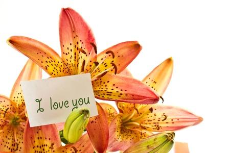Beautiful orange lily flowers on a white background photo