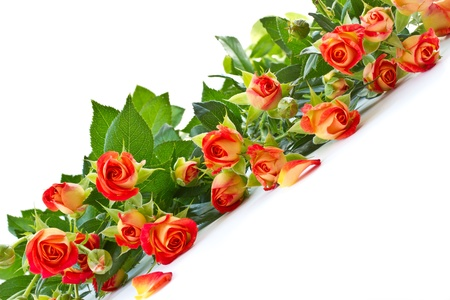 beautiful bouquet of red roses on a white background photo