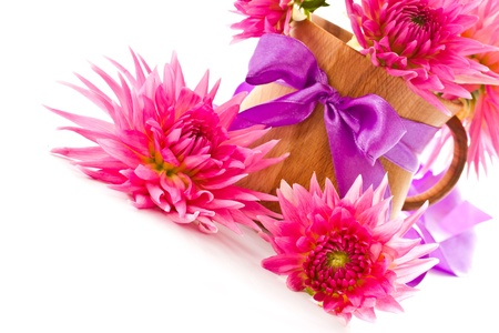 blooming pink dahlias in a vase on a white background Stock Photo - 15097081