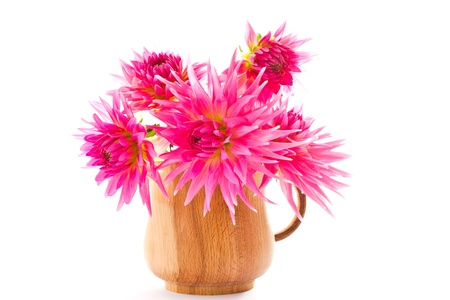 blooming pink dahlias in a vase on a white background photo