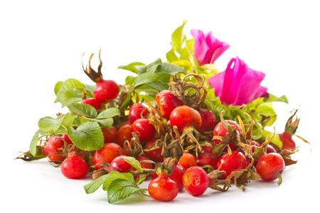 fruits and flowers of wild rose on a white background photo