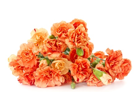 beautiful blooming carnation flowers on a white background Stock Photo - 16727915