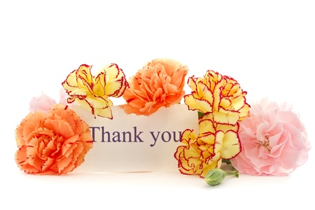 beautiful blooming carnation flowers on a white background Stock Photo - 16727931
