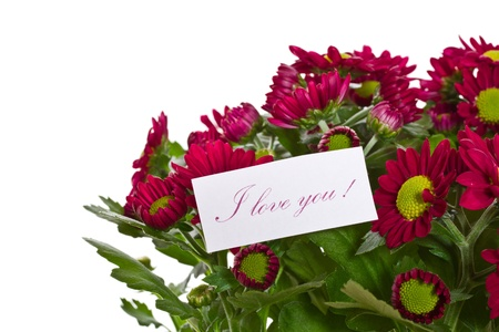 Beautiful purple chrysanthemum with a declaration of love Stock Photo - 18078762