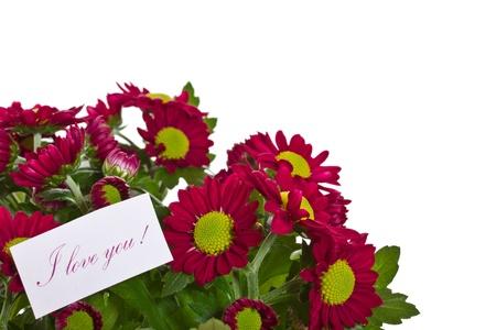 Beautiful purple chrysanthemum with a declaration of love Stock Photo - 18220771