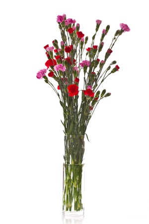 Beautiful carnations in different colors on a white background photo