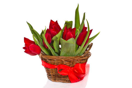 beautiful fresh red tulips on a white background photo