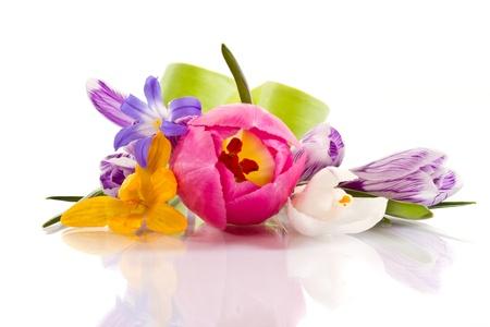 白い背景の美しい春の花