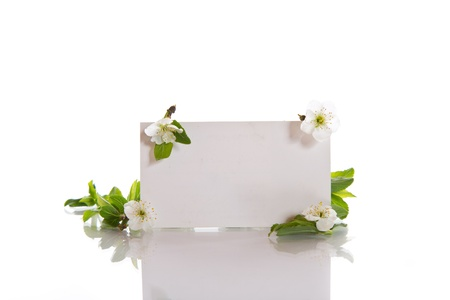 net card with cherry flowers on a white background photo