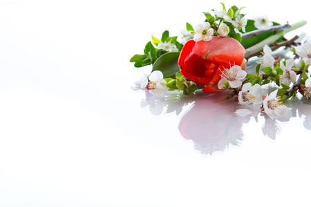 bouquet of spring flowers on a white background photo