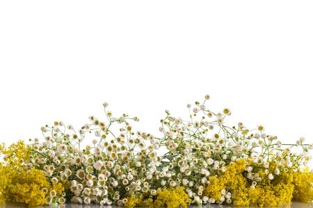 白い背景の上の野生の花の夏の花束 写真素材