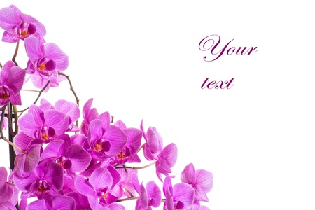 在白色背景上的蝴蝶美麗的花朵
