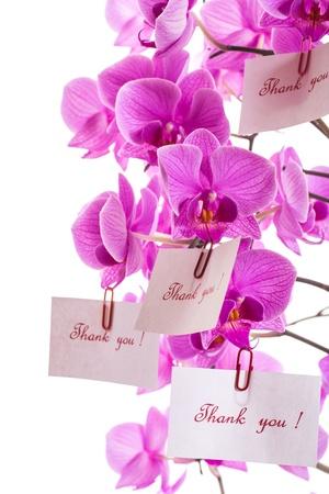 Phalaenopsis beautiful flowers on a white background photo