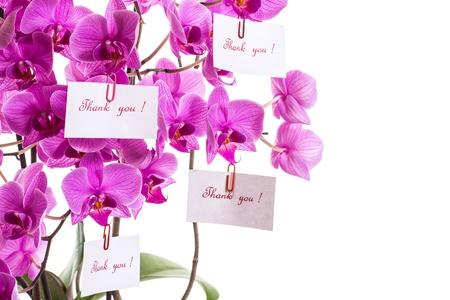 agradecimiento: Phalaenopsis hermosas flores sobre un fondo blanco