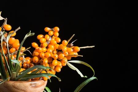 argousier: branche de baies mûres argousier sur un fond noir Banque d'images
