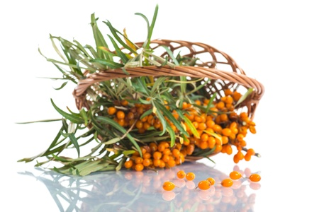 seabuckthorn: branch of ripe sea-buckthorn berries on a white background Stock Photo