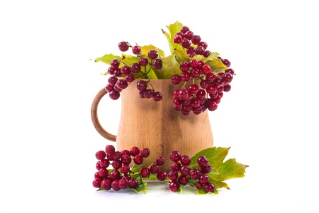 tea viburnum in a cup on a white background photo