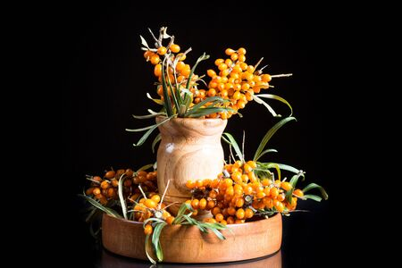 seabuckthorn: branch of ripe sea-buckthorn berries on a black background