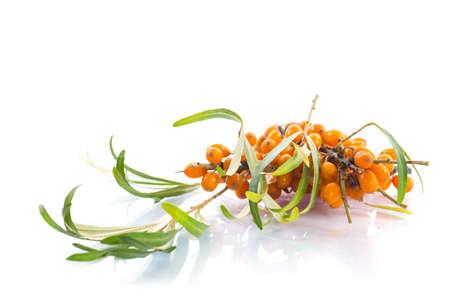 argousier: branche de baies m�res argousier sur un fond blanc