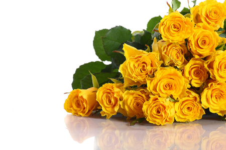 rosas amarillas: hermosas rosas amarillas sobre un fondo blanco