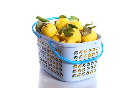 Quince in a basket on a white background photo