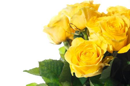 rosas amarillas: ramo de hermosas rosas sobre un fondo blanco