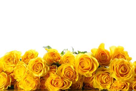 bouquet of beautiful roses on a white background